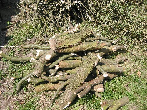 Stiekem een boom snoeien